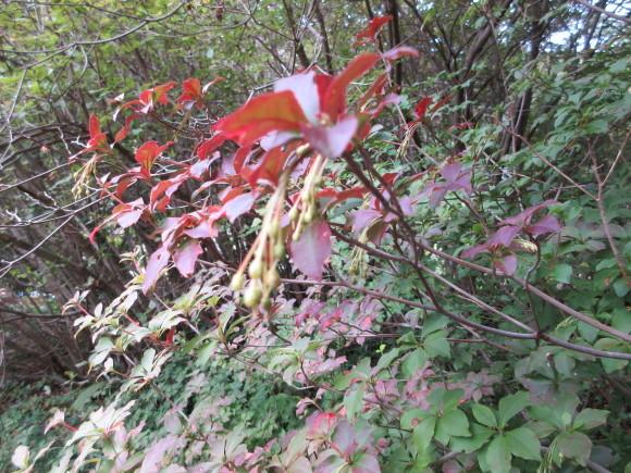 六甲高山植物園_d0154954_18415407.jpg