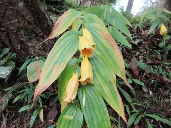 六甲高山植物園_d0154954_18422135.jpg