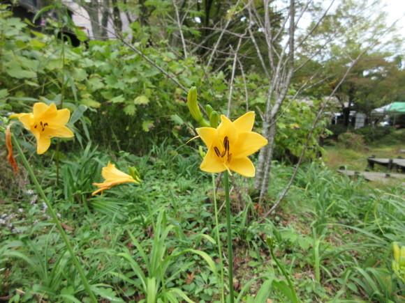 六甲高山植物園_d0154954_18465259.jpg