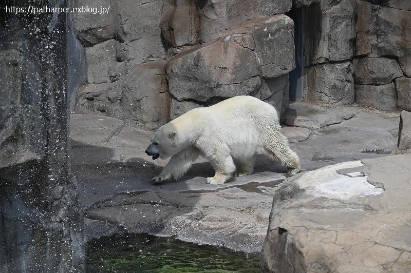 2020年9月 王子動物園3 その3_a0052986_07285716.jpg