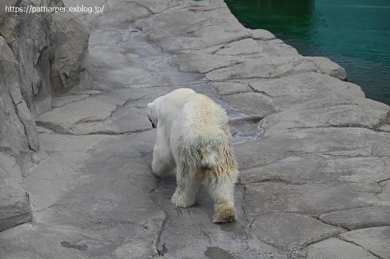 2020年9月 王子動物園3 その3_a0052986_07300464.jpg