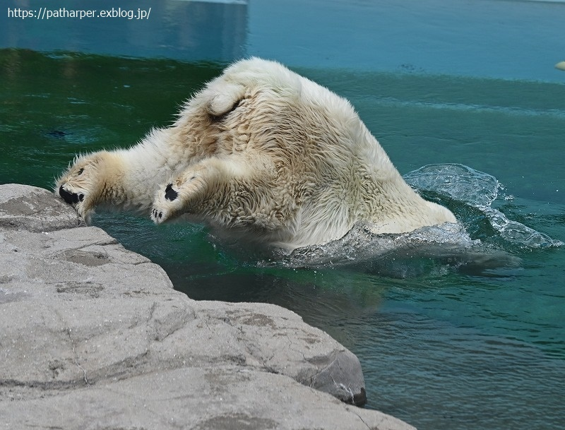 2020年9月 王子動物園3 その3_a0052986_07305532.jpg