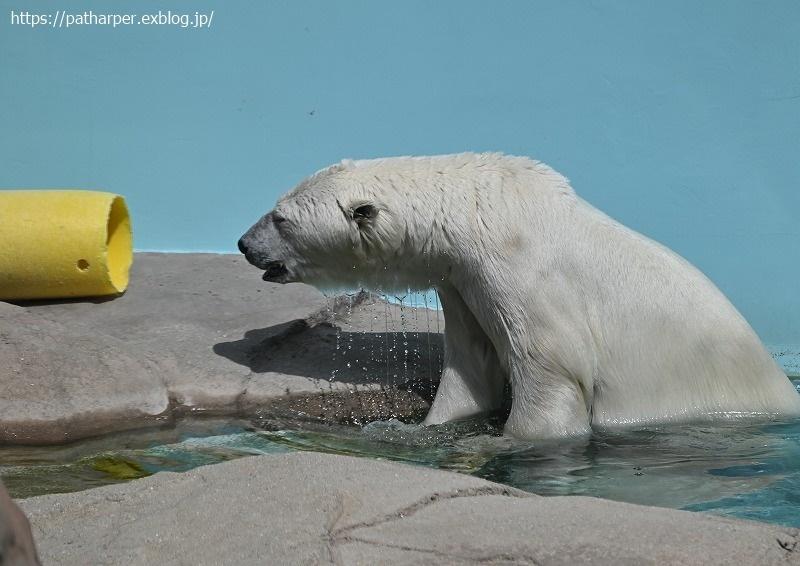 2020年9月 王子動物園3 その3_a0052986_07320820.jpg
