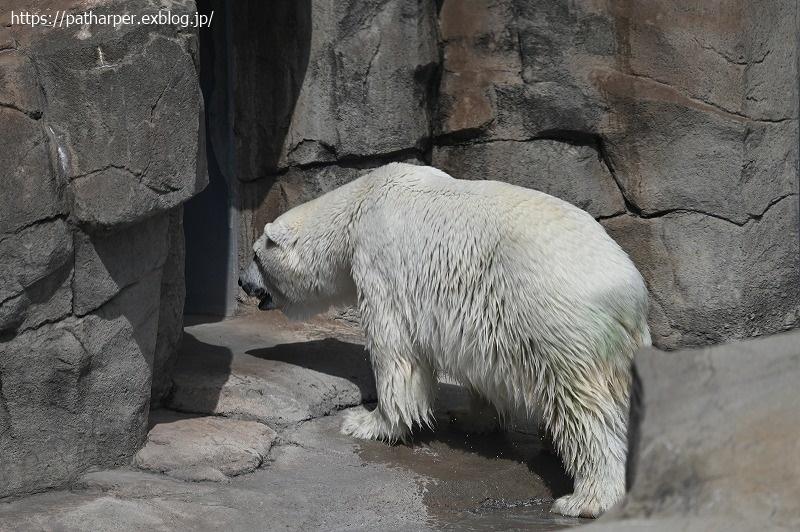 2020年9月 王子動物園3 その3_a0052986_07321038.jpg