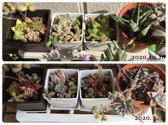 花とみかんとクマバチと_f0162908_20231392.jpg
