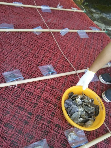海苔の種入れ_e0184224_08525872.jpg
