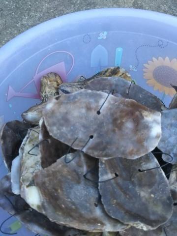 海苔の種入れ_e0184224_08593651.jpg