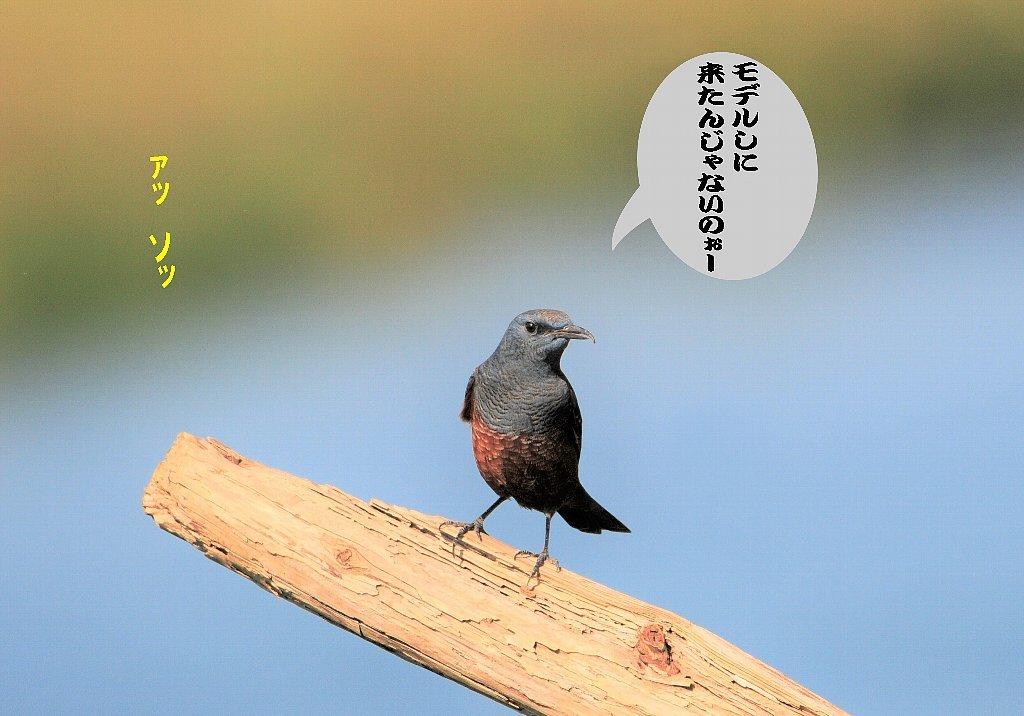 久しぶりの秋晴れ!_b0404848_14485992.jpg
