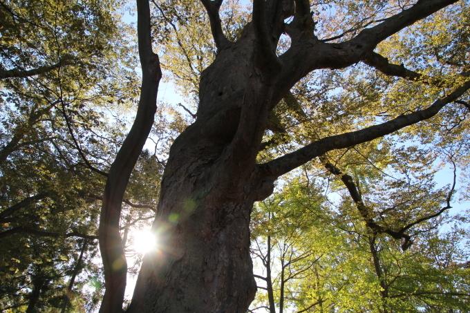 境内は日ごとに秋色を纏っていきます_b0238249_20210936.jpg