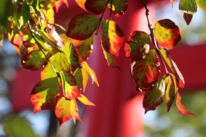 境内は日ごとに秋色を纏っていきます_b0238249_20224688.jpg