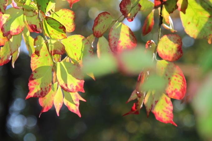 境内は日ごとに秋色を纏っていきます_b0238249_20355341.jpg