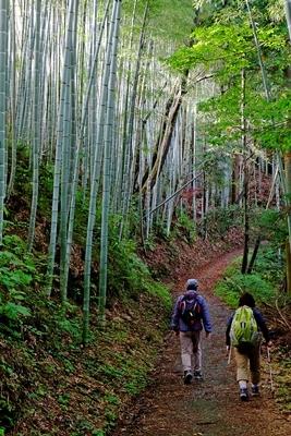 高野山への町石道を歩きました。_b0194861_12194236.jpg