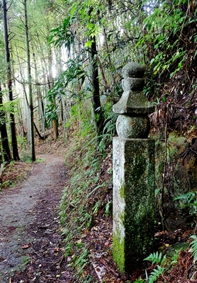 高野山への町石道を歩きました。_b0194861_12201079.jpg