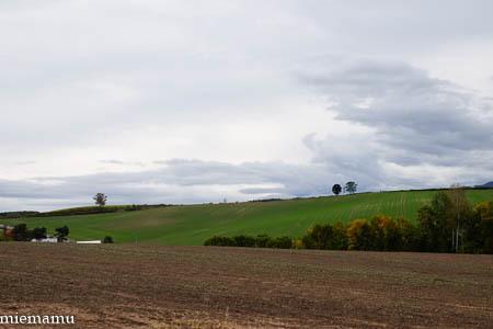 畑の上の「親子の木」~10月の美瑛_d0340565_19490555.jpg