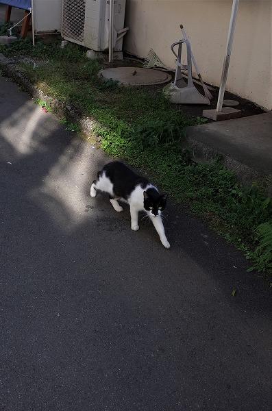 小田原散歩3_d0217271_20193621.jpg