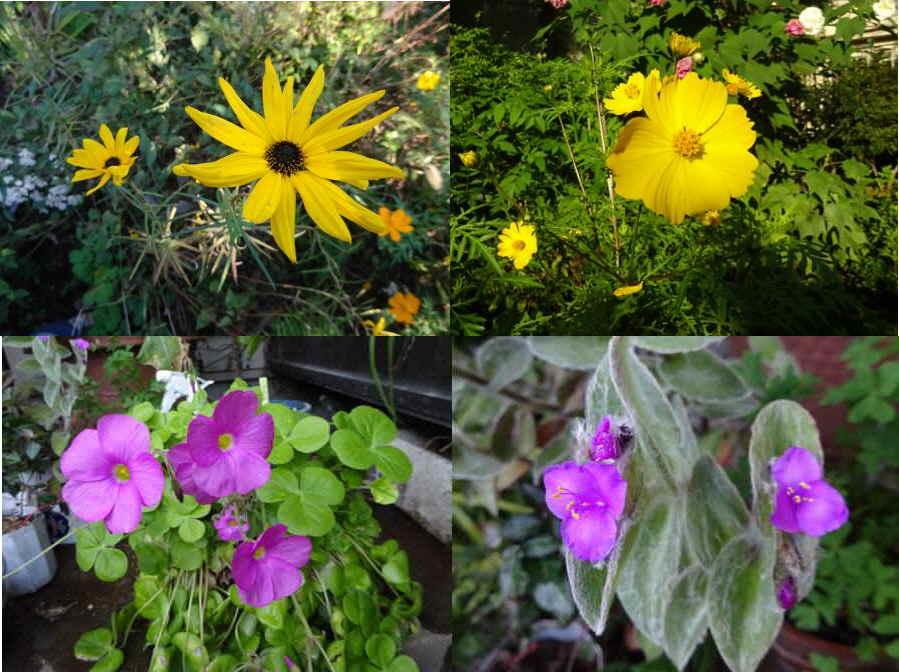 庭の花 秋その6_f0059673_22583515.jpg