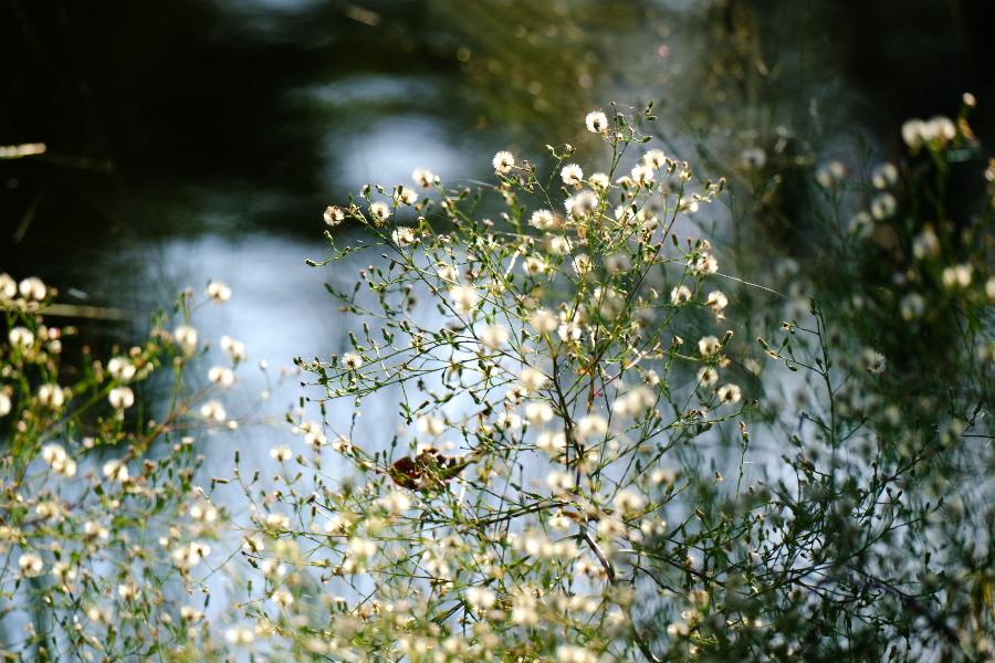 秋のいろ_e0243382_06401164.jpg