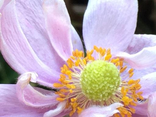 庭の花を接写してみた_f0162908_19475215.jpg
