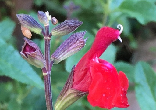 庭の花を接写してみた_f0162908_19475364.jpg