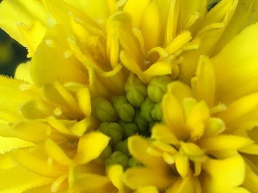 庭の花を接写してみた_f0162908_19475380.jpg