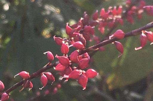 庭の花を接写してみた_f0162908_19475381.jpg