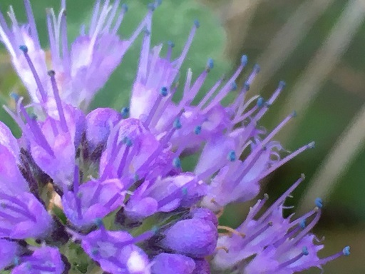 庭の花を接写してみた_f0162908_19475386.jpg