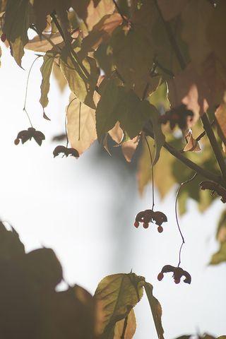 都会のツリ花♪_c0162516_21442093.jpg