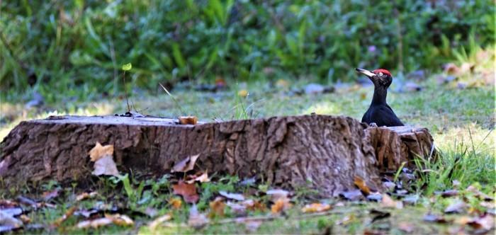 北の森からエゾリスと野鳥便り_d0098721_20401918.jpg