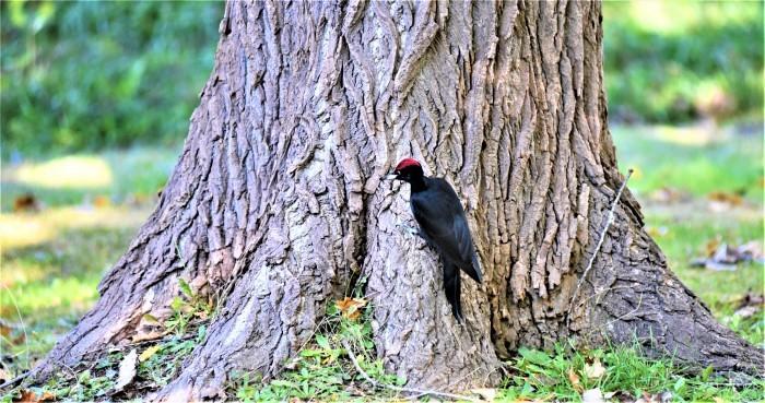 北の森からエゾリスと野鳥便り_d0098721_20402439.jpg