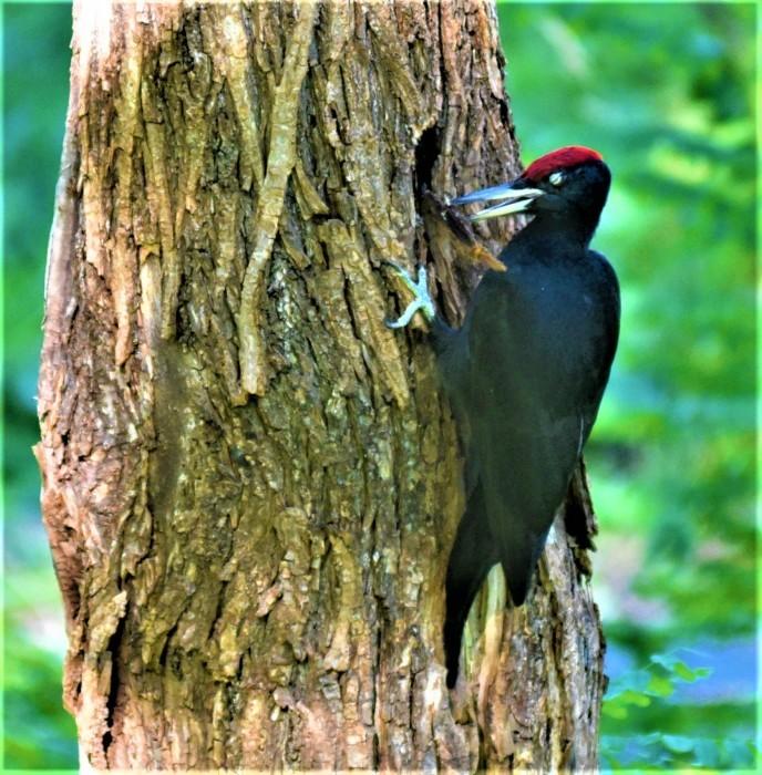 北の森からエゾリスと野鳥便り_d0098721_20404791.jpg