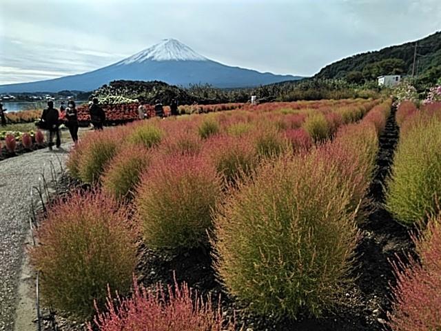 【赤く染まるコキアと富士山の絶景、、他】ミニツアー_f0354923_22095632.jpg