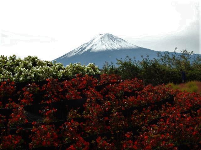 【赤く染まるコキアと富士山の絶景、、他】ミニツアー_f0354923_22130046.jpg