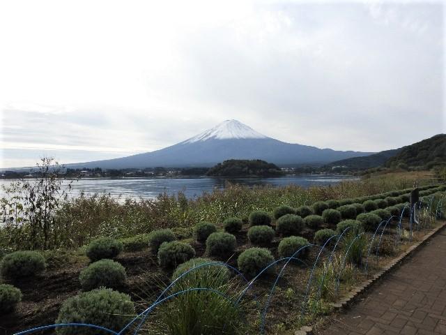 【赤く染まるコキアと富士山の絶景、、他】ミニツアー_f0354923_22250882.jpg