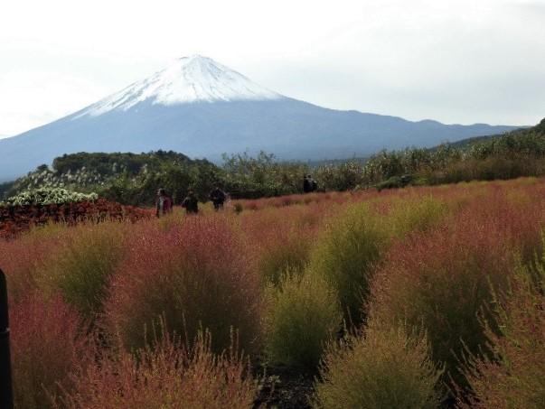 【赤く染まるコキアと富士山の絶景、、他】ミニツアー_f0354923_23270975.jpg