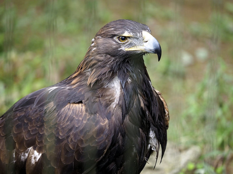 八木山動物公園の猛禽類たち_f0224624_22572254.jpg