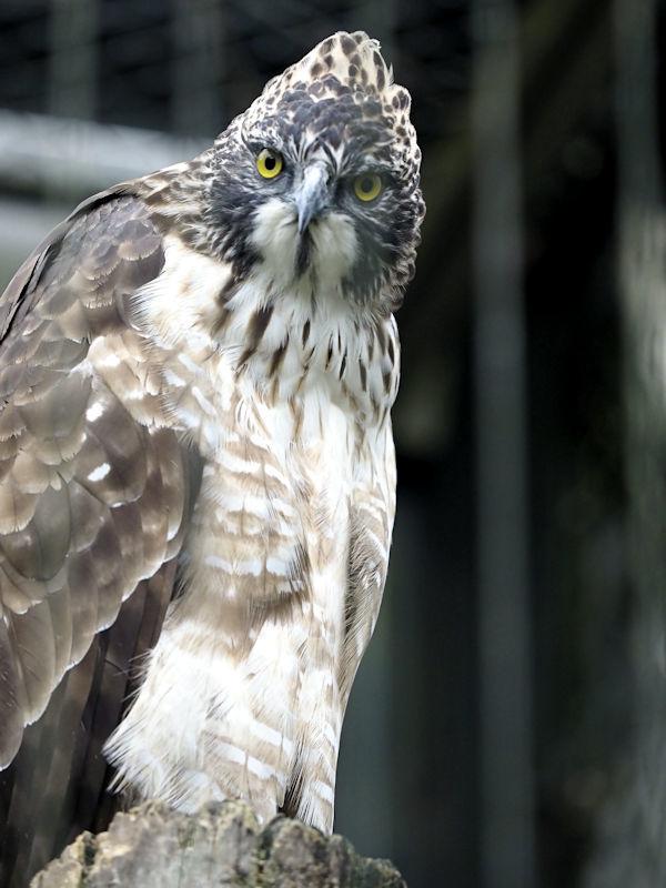 八木山動物公園の猛禽類たち_f0224624_22582884.jpg