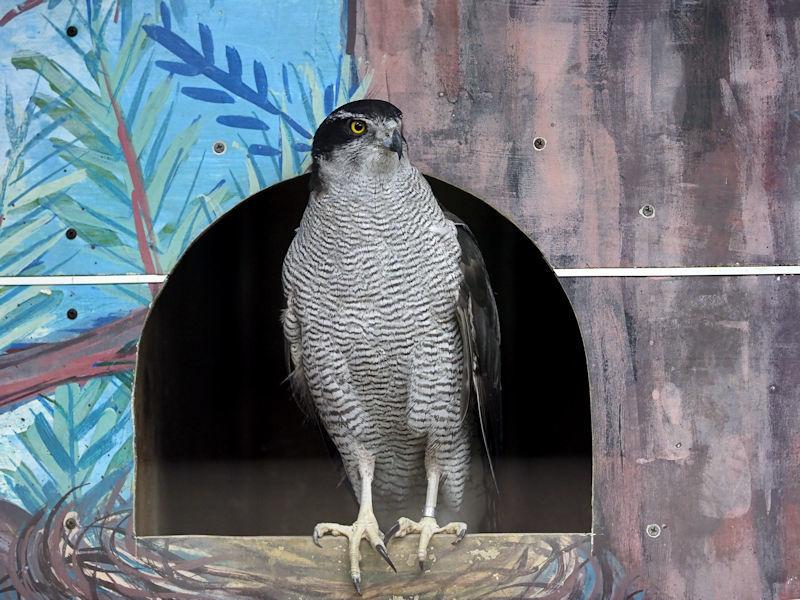八木山動物公園の猛禽類たち_f0224624_22585212.jpg
