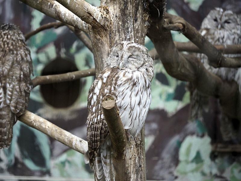 八木山動物公園の猛禽類たち_f0224624_22592764.jpg