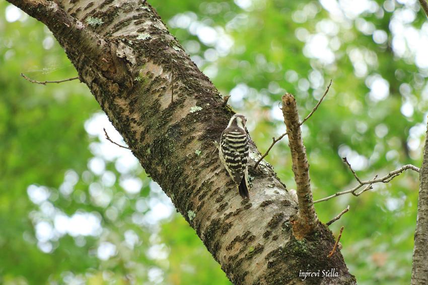 林の中で_d0015026_08551098.jpg
