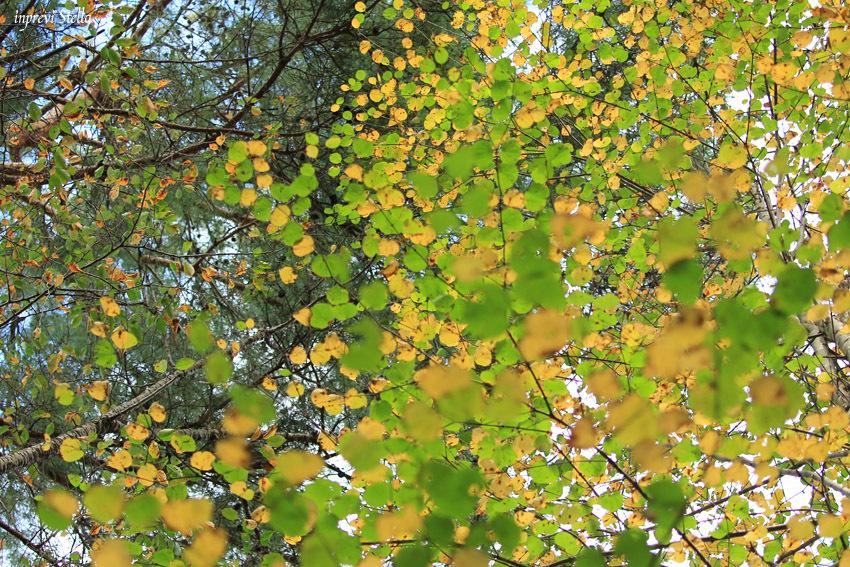 林の中で_d0015026_08552428.jpg