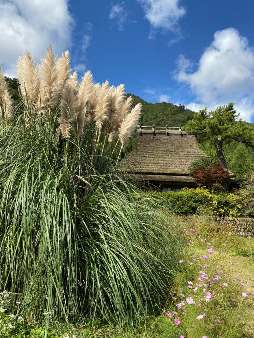 秋本番★美山自然文化村キャンプ場(2日目)_c0113733_00375775.jpg