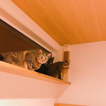 猫見窓に爪とぎを設置する、の巻。_c0367433_13101892.jpg