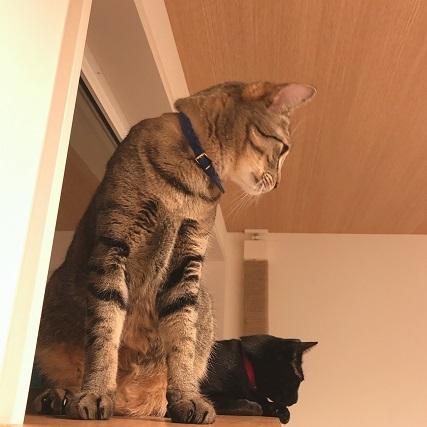 猫見窓に爪とぎを設置する、の巻。_c0367433_13124356.jpg
