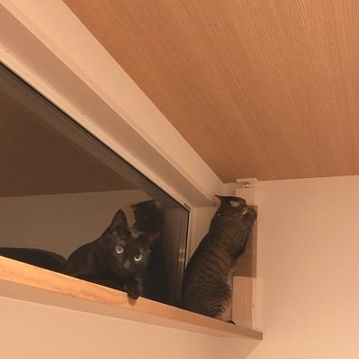 猫見窓に爪とぎを設置する、の巻。_c0367433_13131680.jpg