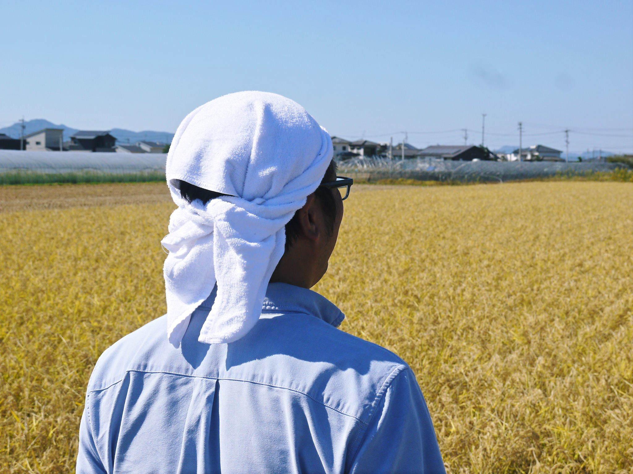 無農薬の『雑穀米』『発芽玄米』『米粉(微細粒米粉)』大好評販売中 稲刈りの様子2020(後編)_a0254656_18060273.jpg