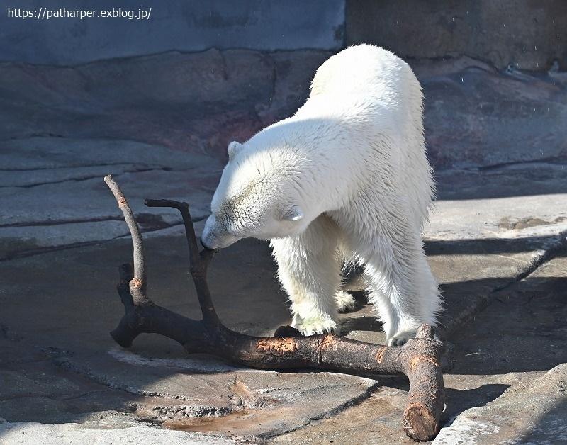 2020年9月 王子動物園4 その1_a0052986_07273996.jpg