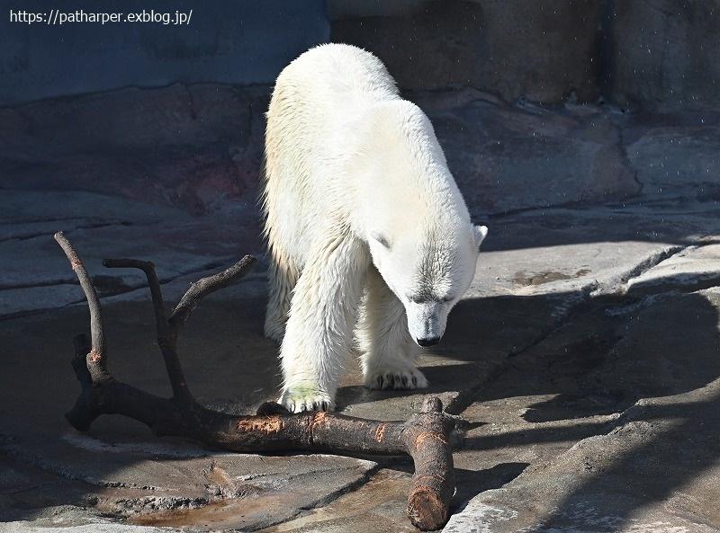 2020年9月 王子動物園4 その1_a0052986_07274122.jpg