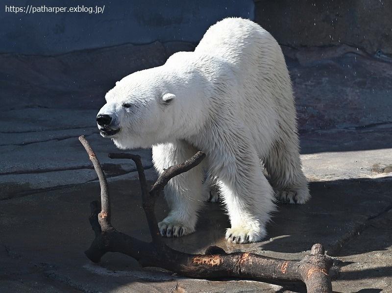 2020年9月 王子動物園4 その1_a0052986_07274449.jpg