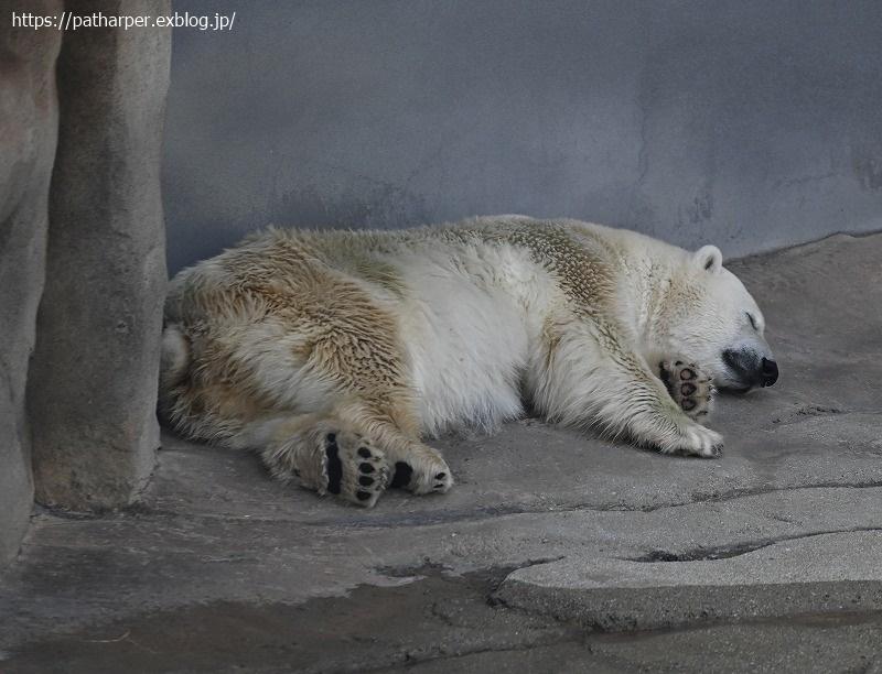 2020年9月 王子動物園4 その1_a0052986_07392399.jpg