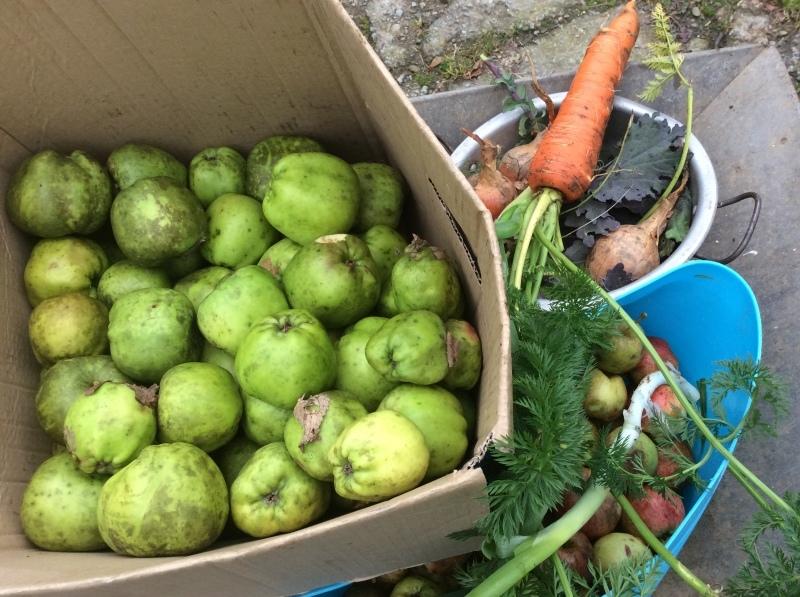 新月の夕方は、リンゴの収穫_b0110999_05071539.jpeg